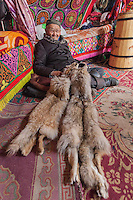 Asia Mongolia, Altai mountain,Saikhsai, the hunter ,75 old Karmenkhan inhis ger with the furs of the foxs hunted