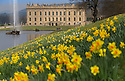 08/04/15<br /> <br /> Daffodils nod their heads in the sunshine as fantastic spring weather continues at Chatsworth House in the Derbyshire Peak District.<br /> <br /> All Rights Reserved - F Stop Press.  www.fstoppress.com. Tel: +44 (0)1335 418629 +44(0)7765 242650