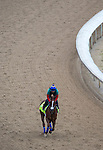 APRIL 30, 2015: War Story, trained by Tom Amoss, exercises in preparation for the 141st Kentucky Oaks during morning workouts at Churchill Downs in Louisville, Kentucky. Ting Shen/ESW/Cal Sport Media