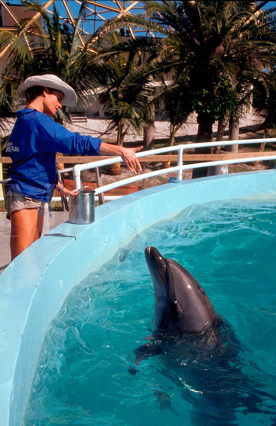 Woman training dolphin with hand signals at aquarium.