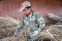 A woman processes reeds, harvested from the Zhalong Wetlands, Heilongjiang Province. China. 2011