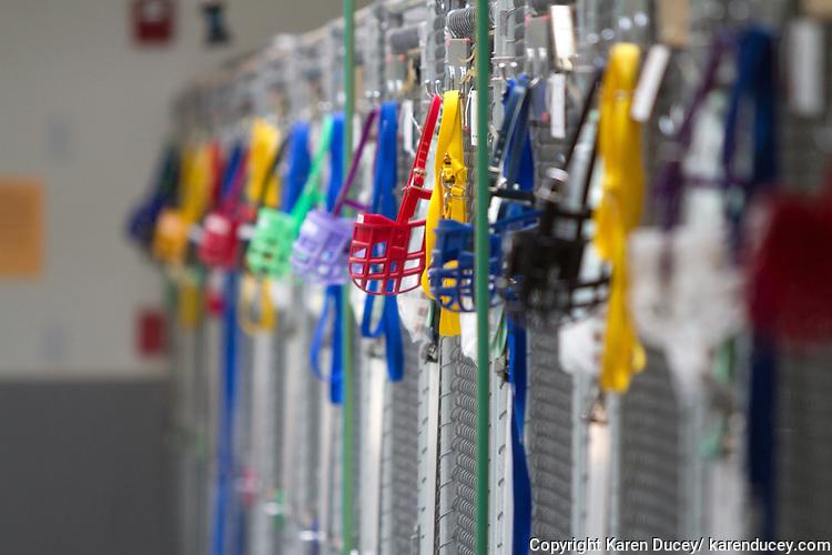 Muzzles hang from each run at Greyhound Pets Inc.