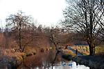Europa, DEU, Deutschland, Nordrhein Westfalen, NRW, Rheinland, Niederrhein, Leuth, Naturpark Maas-Schwalm-Nette, Fluss Nette, Flusslandschaft, Hoeckerschwaene, Spaziergaenger, Kategorien und Themen, Natur, Umwelt, Landschaft, Landschaftsfotos, Landschaftsfotografie, Landschaftsfoto, Tourismus, Touristik, Touristisch, Touristisches, Urlaub, Reisen, Reisen, Ferien, Urlaubsreise, Freizeit, Reise, Reiseziele, Ferienziele<br /> <br /> [Fuer die Nutzung gelten die jeweils gueltigen Allgemeinen Liefer-und Geschaeftsbedingungen. Nutzung nur gegen Verwendungsmeldung und Nachweis. Download der AGB unter http://www.image-box.com oder werden auf Anfrage zugesendet. Freigabe ist vorher erforderlich. Jede Nutzung des Fotos ist honorarpflichtig gemaess derzeit gueltiger MFM Liste - Kontakt, Uwe Schmid-Fotografie, Duisburg, Tel. (+49).2065.677997, archiv@image-box.com, www.image-box.com]