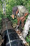 Shay Hurd Looking to Sedate Black Bear