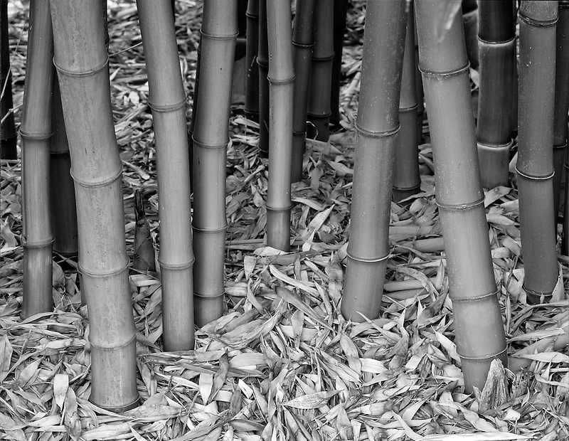 Bamboo trunks. Northwest Garden Nursery, Eugene, Oregon