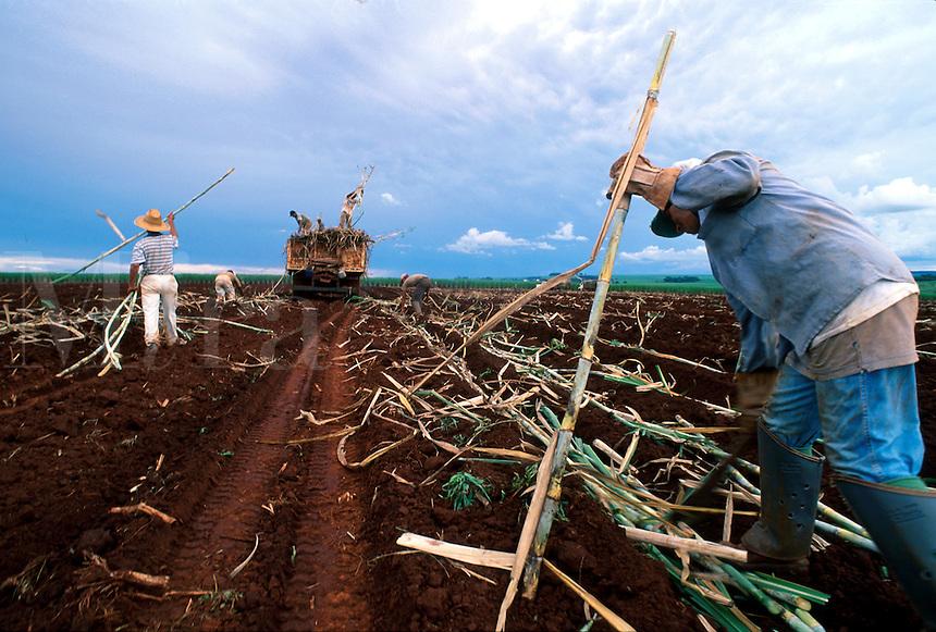 Brazilian field workers harvest sugar cane. Brazil.