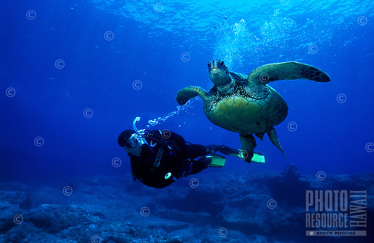 Scuba diver swims along side a green sea turtle in Hawaii's pristines waters