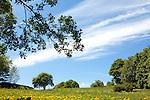 Europa, DEU, Deutschland, Hessen, Rhoen, Hessische Rhoen, Typische Landschaft, Fruehling, Loewenzahn, Bluete, Baum, Kategorien und Themen, Natur, Umwelt, Landschaft, Landschaftsfotos, Landschaftsfotografie, Landschaftsfoto, Tourismus, Touristik, Touristisch, Touristisches, Urlaub, Reisen, Reisen, Ferien, Urlaubsreise, Freizeit, Reise, Reiseziele, Ferienziele<br /> <br /> [Fuer die Nutzung gelten die jeweils gueltigen Allgemeinen Liefer-und Geschaeftsbedingungen. Nutzung nur gegen Verwendungsmeldung und Nachweis. Download der AGB unter http://www.image-box.com oder werden auf Anfrage zugesendet. Freigabe ist vorher erforderlich. Jede Nutzung des Fotos ist honorarpflichtig gemaess derzeit gueltiger MFM Liste - Kontakt, Uwe Schmid-Fotografie, Duisburg, Tel. (+49).2065.677997, ..archiv@image-box.com, www.image-box.com]
