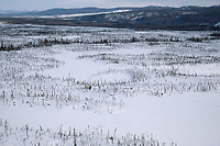 Aerial of Teams on Trail Between Ophir & Cripple<br /> 2004 Iditarod