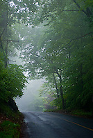 Foggy country road<br />