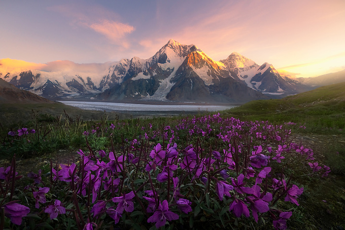 Wildflowers on a 5000 ft. ridge across this glaciated valley in the wilderness of the eastern Alaska Range. I photographed this scene at sunset (around midnight), then hiked back to camp to be ready for a 4 a.m. sunrise!