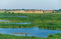 Leyhörn an der Leybucht, Blick vom Seedeich auf binnendeichs gelegene Tümpel, Feuchtgebiet, Feuchtbiotop, Niedersachsen