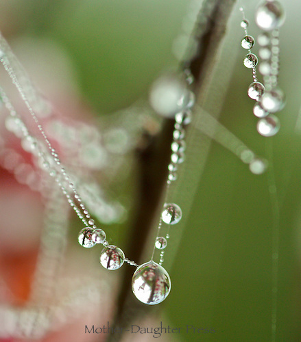Spider web cris-crosses a plant in the garden and with beads of dew like jewels among the flowers