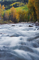 Dolores River and Cottonwoods in fall color, Dolores, San Juan National Forest, Colorado, USA, September 2007