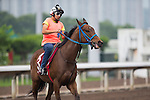 SHA TIN,HONG KONG-APRIL 30: Mongolian Saturday ,trained by Ganbat Enebish ,exercises in preparation for the Chairman's Sprint Prize at Sha Tin Racecourse on April 30,2016 in Sha Tin,New Territories,Hong Kong (Photo by Kaz Ishida/Eclipse Sportswire/Getty Images)