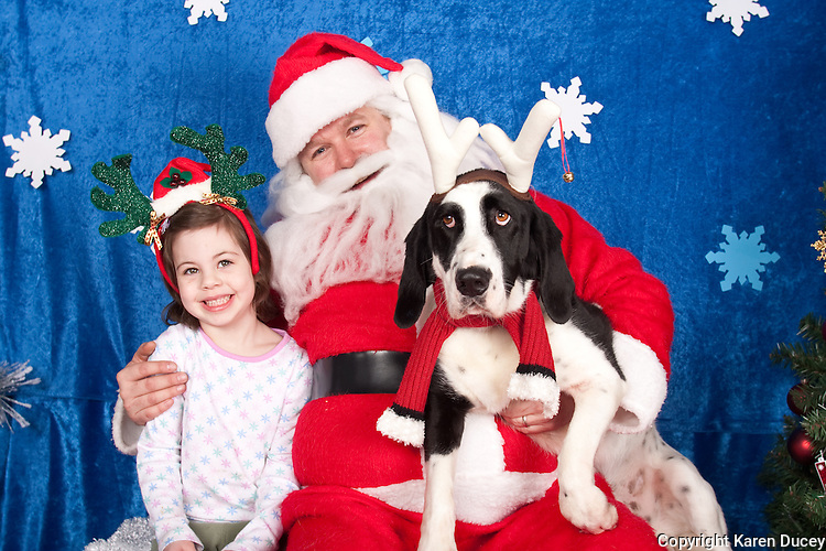 Dogs are photographed with Santa at a fundraiser for Dogs Deserve Better at Pet Pros in Redmond, WA on December 12, 2010. (photo by Karen Ducey)Digger and Kewri's daughter are photographed with Santa at a fundraiser for Dogs Deserve Better at Pet Pros in Redmond, WA on December 12, 2010. (photo by Karen Ducey)