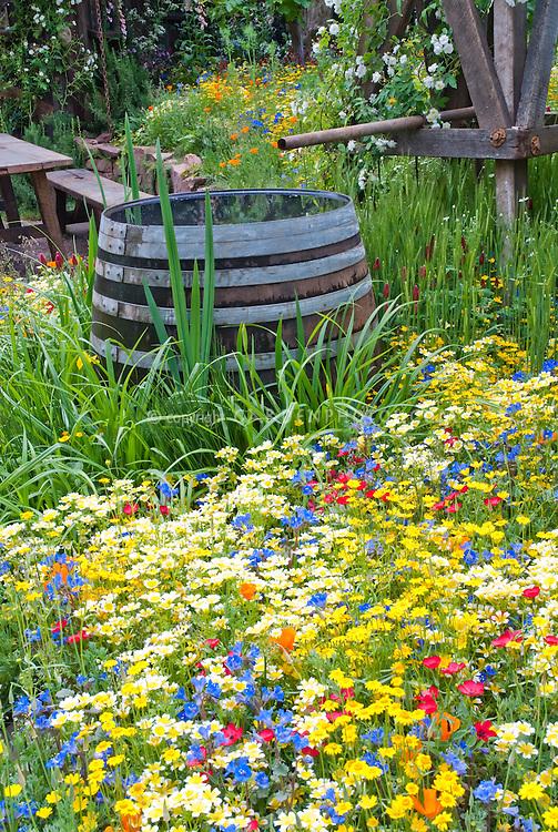 Rainwater Collecting in Barrel in Garden