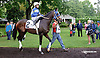 Papa's Forest before The Tax Free Shopping Distaff on Owners Day at Delaware Park on 9/13/14