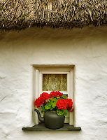 Begonia flower in pot and window and thatched roof. Bunratty Castle, ireland