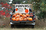 A self service pumpkin stand in the back of a pickup truck; large can for payment to the right. (Photograph by Jonathan P. Larsen)