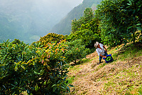 A Colombian farm worker inspects an avocado tree during a harvest at a plantation near Sonsón, Antioquia department, Colombia, 21 November 2019. Over the past decade, the Colombian avocado industry has experienced massive growth, both as a result of general economic development in Colombia, and the increased global demand for so-called superfood products. The geographical and climate conditions in Antioquia (high altitude, no seasonal extremes, high precipitation rate) allow two harvest windows of the Hass avocado variety across the year. Although the majority of the Colombian avocado exports are destined towards Europe now, Colombia aspires to become one of the major avocado suppliers to the U.S. market in the near future.