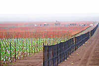 View over the vineyard rain mist in the distance, black wind breaker windbreaker net to protect from the fierce winds Bodega Del Fin Del Mundo - The End of the World - Neuquen, Patagonia, Argentina, South America