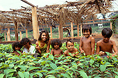 Juruena, Brazil. Group of children with tree seedlings for a reforestation project in the Amazon rainforest; Mato Grosso State.