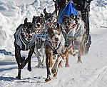 Canadian Championship Dog Derby 2014