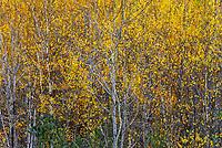 Autumn saplings in full color.