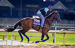 October 31, 2018 : Mr. Money, trained by W. Bret Calhoun, exercises in preparation for the Breeders' Cup Juvenile at Churchill Downs on October 31, 2018 in Louisville, Kentucky. Carolyn Simancik/Eclipse Sportswire/CSM
