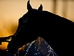 LOUISVILLE, KY - APRIL 30: A horse gets a bath after morning workouts at Churchill Downs on April 30, 2018 in Louisville, Kentucky. (Photo by Scott Serio/Eclipse Sportswire/Getty Images)