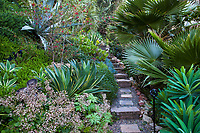 Crassula multicava, Agave desmetiana 'Variegata', Grevillea 'Ruby Clusters', Jim Bishop and Scott Borden garden