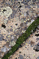 Lichen and moss grow on bedrock at the top of Mount Siskiwit, near the Greenstone Ridge Trail in Isle Royale National Park, Michigan.<br /> <br /> © Michael Forster Rothbart<br /> www.mfrphoto.com <br /> 607-267-4893 o 607-432-5984<br /> 5 Draper St, Oneonta, NY 13820<br /> 86 Three Mile Pond Rd, Vassalboro, ME 04989<br /> info@mfrphoto.com<br /> Photo by: Michael Forster Rothbart<br /> Date: 7/2004    File#:  color slide