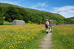 Great Britain, England, North Yorkshire, Yorkshire Dales National Park, Near Muker: Walkers amongst Buttercup filled meadow in Swaledale valley | Grossbritannien, England, North Yorkshire, Yorkshire Dales National Park, Near Muker: Wanderer zwischen Blumenwiesen voller Butterblumen im Swaledale valley