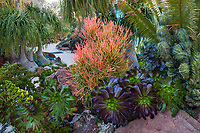 Undersea Garden with succulents by Jeff Moore with Euphorbia tirucalli 'Sticks on Fire' - Red Pencil Tree, Aeoniums, at San Diego Botanic Garden