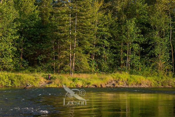 Bird watching along Nisqually River, WA.  July.