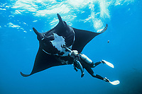 giant oceanic manta ray and scuba diver, Isla San Benedicto, Mobula birostris, formerly Manta birostris, Mexico, East Pacific Ocean