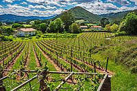 Amunategi Wine Cellar of txakoli. Busturia. Urdaibai biosphere reserve. Urdaibai Region. Bizkaia. Basque Country. Spain.