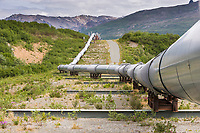 Trans Alaska oil pipeline on slide rails as part of the earthquake resistant engineering. Alaska Range mountains, Interior, Alaska.