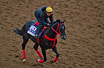 DEL MAR, CA - OCTOBER 31: Sharp Azteca, owned by Gelfenstein Farm and trained by Jorge Navarro, exercises in preparation for the Breeders' Cup Las Vegas Dirt Mile at Del Mar Thoroughbred Club on October 31, 2017 in Del Mar, California. (Photo by Michael McInally/Eclipse Sportswire/Breeders Cup)