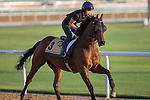 MEYDAN,DUBAI-MARCH 24: Rich Tapestry ,trained by Michael Chang,exercises in preparation for the Dubai Golden Shaheen at Meydan Racecourse on March 24,2016 in Meydan,Dubai (Photo by Kaz Ishida)