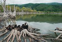 Dead trees surround Maubara Lake in the Liquica district of Timor-Leste (East Timor).