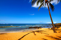 Palm tree, with a second tree shadow, on a golden sand beach, with the Pacific Ocean in the background, in Kauai Island in Hawaii