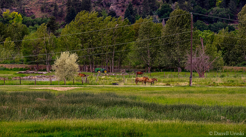 Landscape art scenic photograph of a pastoral scene with two horses standing amongst the grassy pasture in the South Okanagan Valley in British Columbia, Canada.
