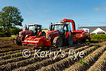 Cliffords Ardfert potato farmsorting the potatoes as they are been harvested