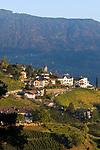 Italien, Suedtirol, bei Meran, Dorf Tirol: umgeben von Weinbergen | Italy, South Tyrol, Alto Adige, near Merano, Tirolo: surrounded by vineyards