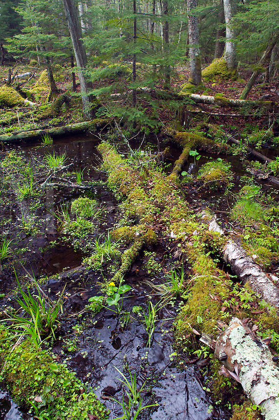 This is a low, wet area between natural ridges in Door County, Shivering Sands Preserve, The Nature Conservancy, Wisconson
