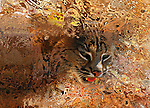 Wildcat Emerging From Chaos