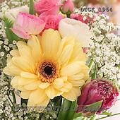 Gisela, FLOWERS, BLUMEN, FLORES, photos+++++,DTGK1964,#f#