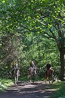 Europe/France/Aquitaine/64/Pyrénées-Atlantiques/Pays-Basque/env d'Urrugne: Randonnée équestre sur le Sentier des Contrebandiers -  Sur le  Chemin Napoléonien entre la Chapelle du quartier d'Olhette et la Venta Inzola [Autorisation : 2011-125] [Autorisation : 2011-126] [Autorisation : 2011-127]
